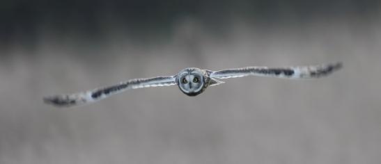 bird-mazoni