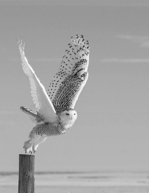 angel-bird